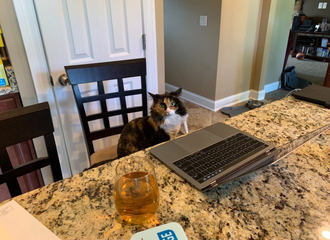 When Your Pets are Your Coworkers: The Furry Side of Working Remote